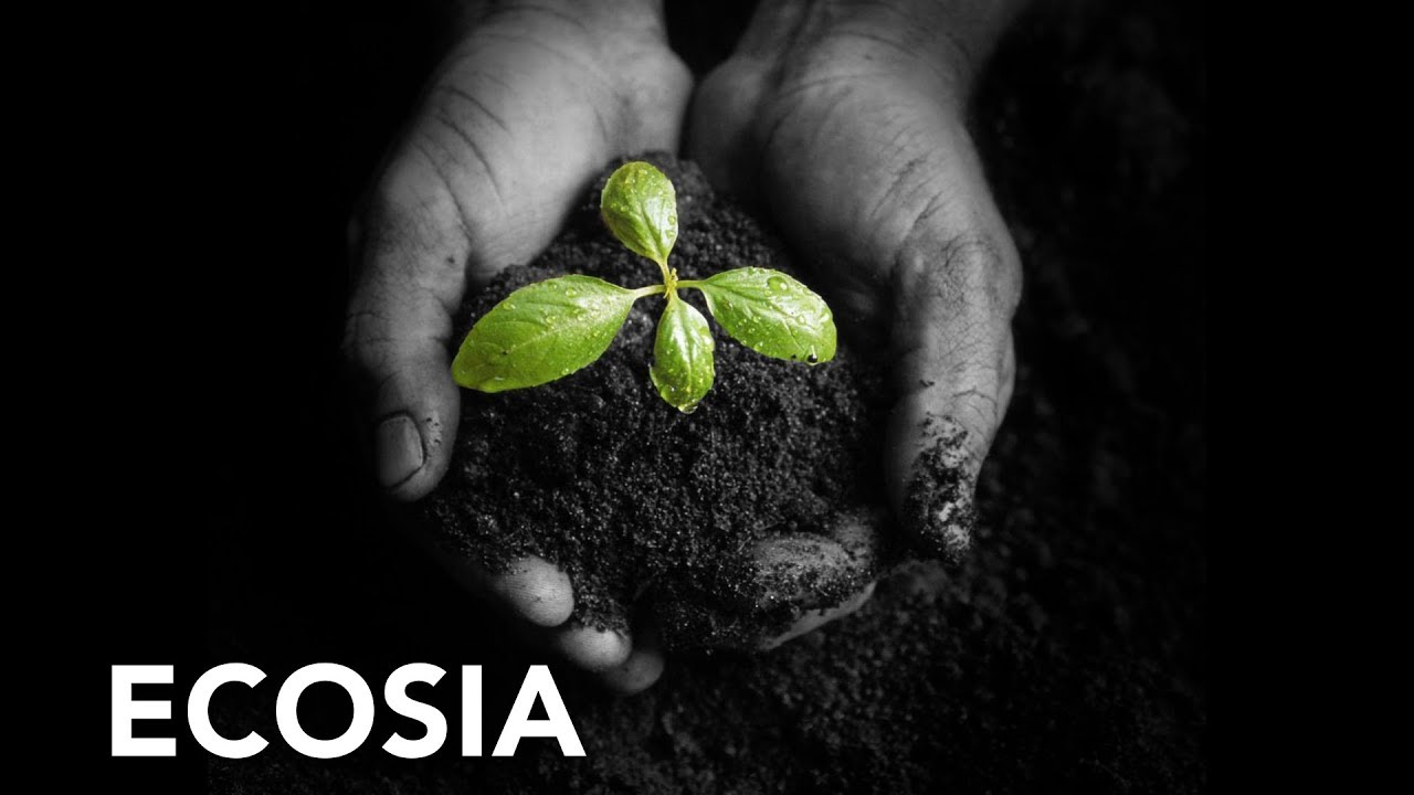 Ecosia. El buscador que planta árboles