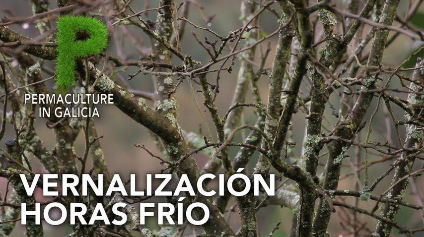 Vernalización. Dormancia. Requerimiento de horas frío | Permacultura en Galicia