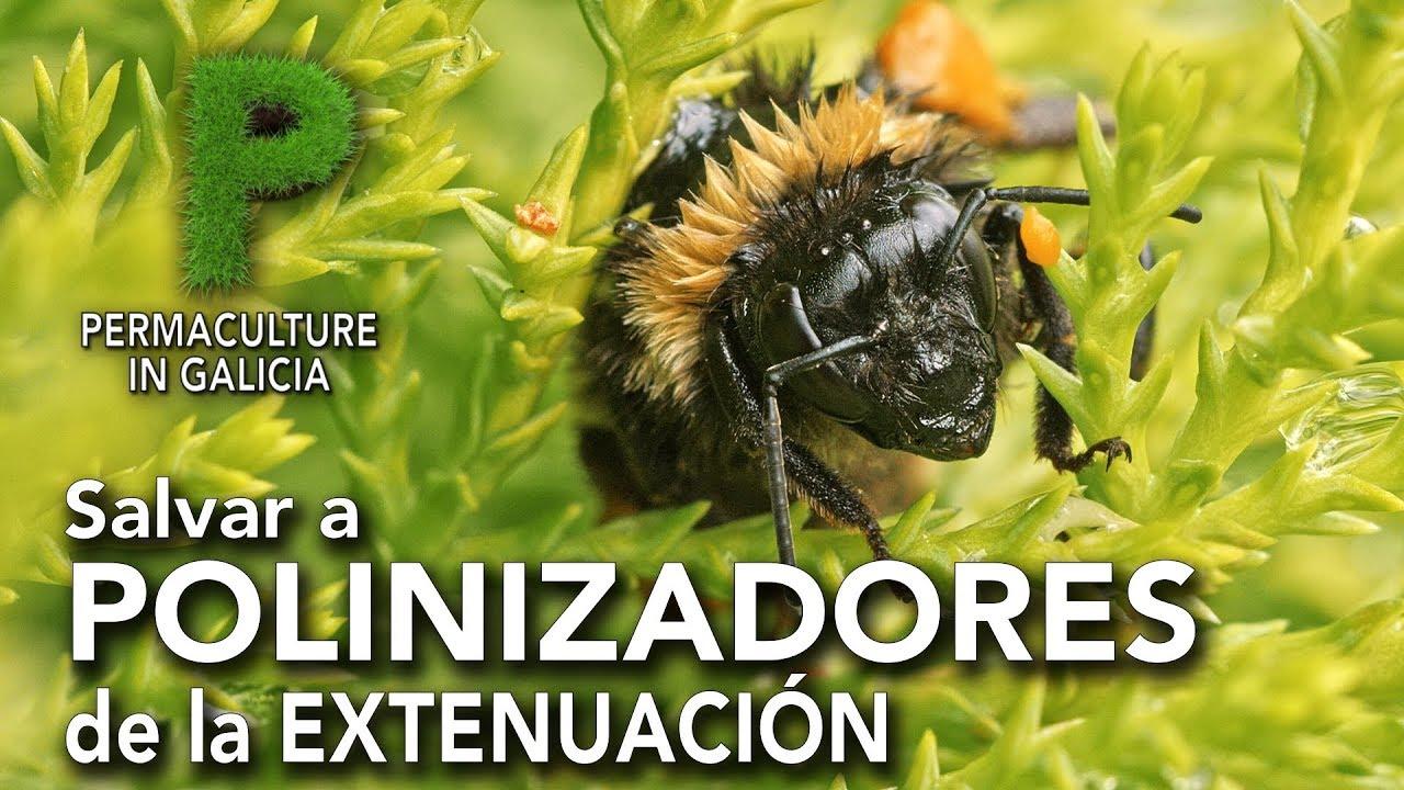 Salvar a abejas y abejorros de la extenuación | Permacultura en Galicia