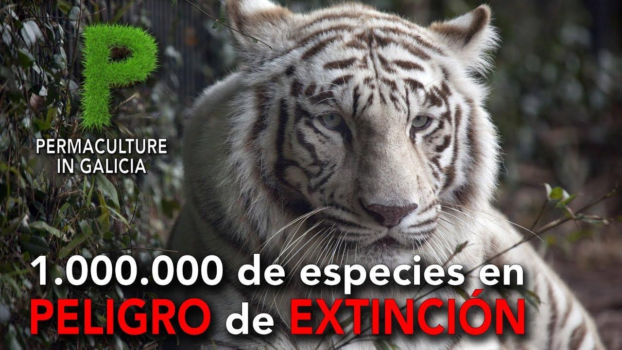 Un millón de especies en Peligro de Extinción | Permacultura en Galicia