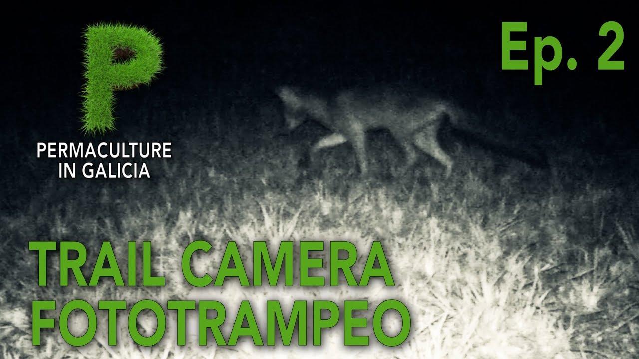 Fototrampeo Ep. 02 - Zorro pequeño en verano | Permacultura en Galicia