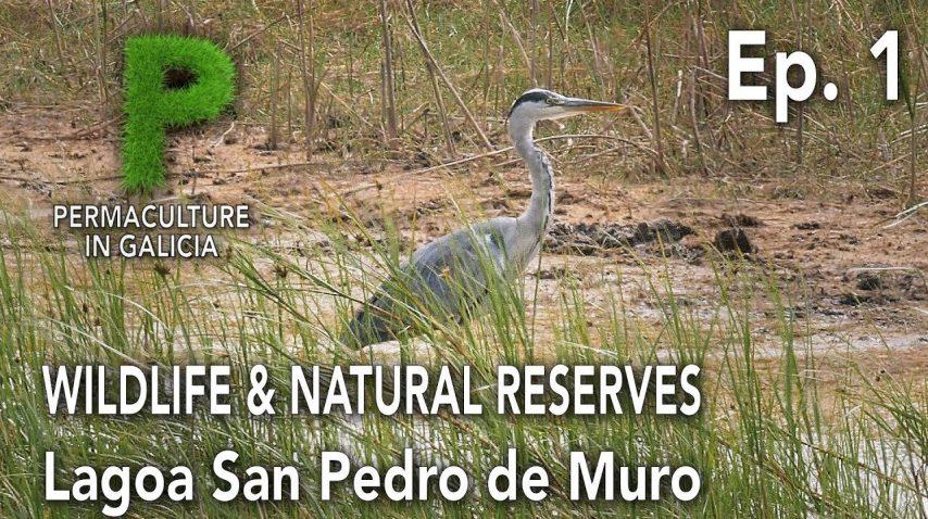 Wildlife. Reservas Naturales Ep01 Lagoa de San Pedro de Muro | Permacultura en Galicia