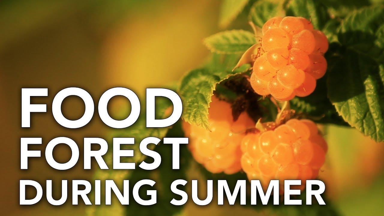 Bosque de alimentos durante el verano | Permacultura en Galicia