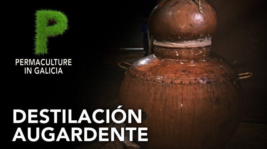 Destilación aguardiente gallego| 4K Castellano | Permacultura en Galicia