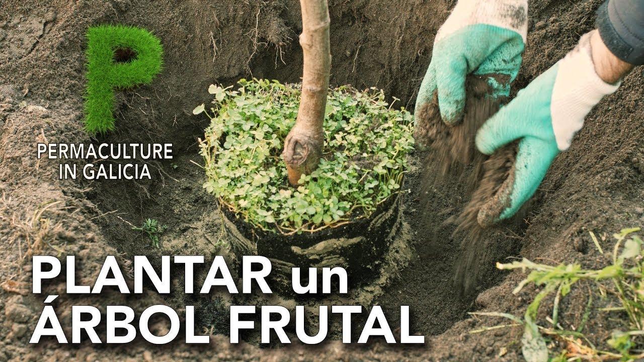 Cómo plantar un árbol frutal | Permacultura en Galicia
