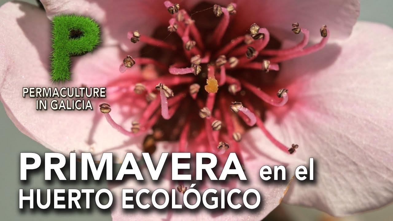Primavera en el huerto ecológico o bosque de alimentos | Permacultura en Galicia