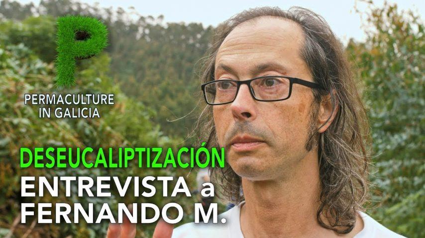 DESEUCALIPTIZACIÓN. 4K Castellano |  Entrevista a Fernando Marcelín | Permacultura en Galicia