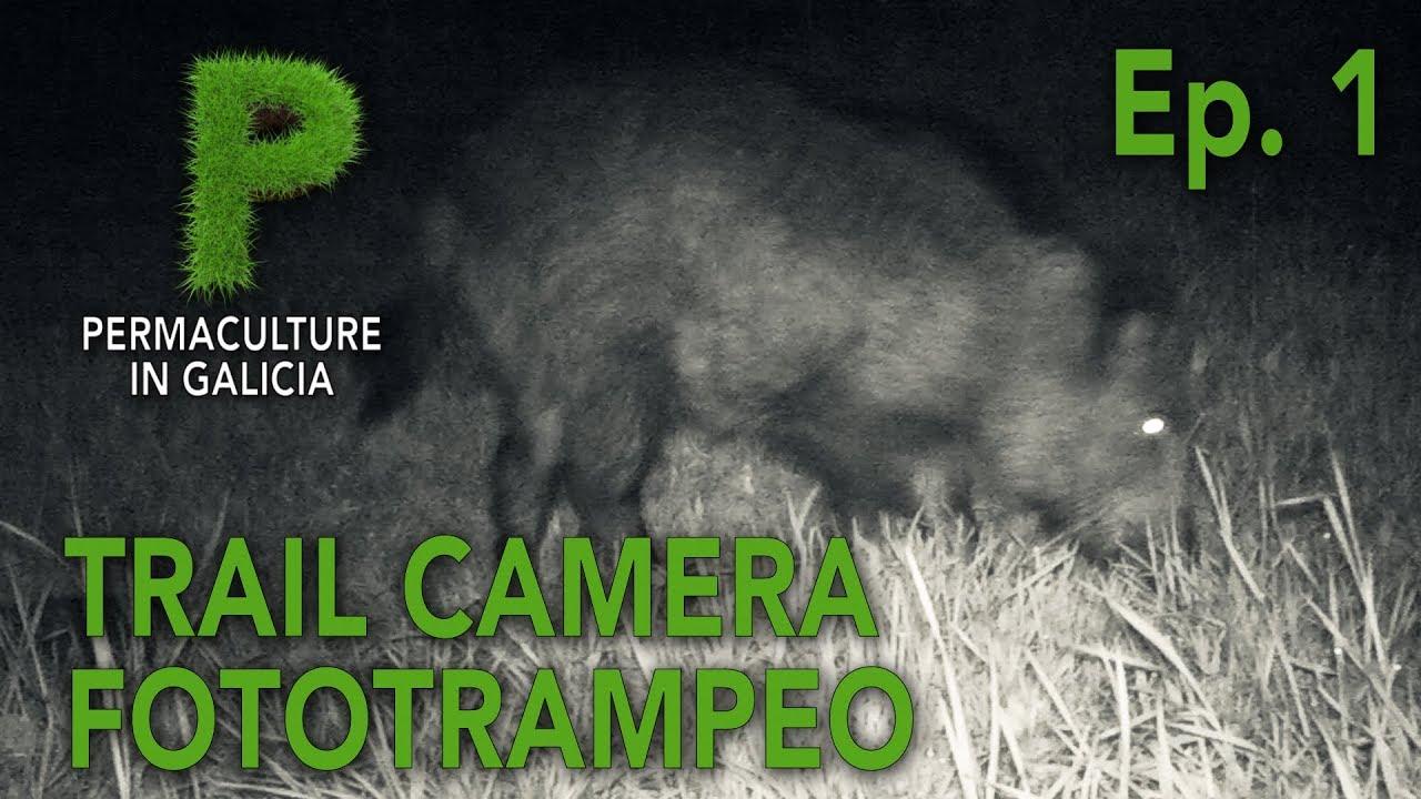 Trail Camera | Fototrampeo Ep1 | Jabalí, zorro, mirlo... | Permacultura en Galicia