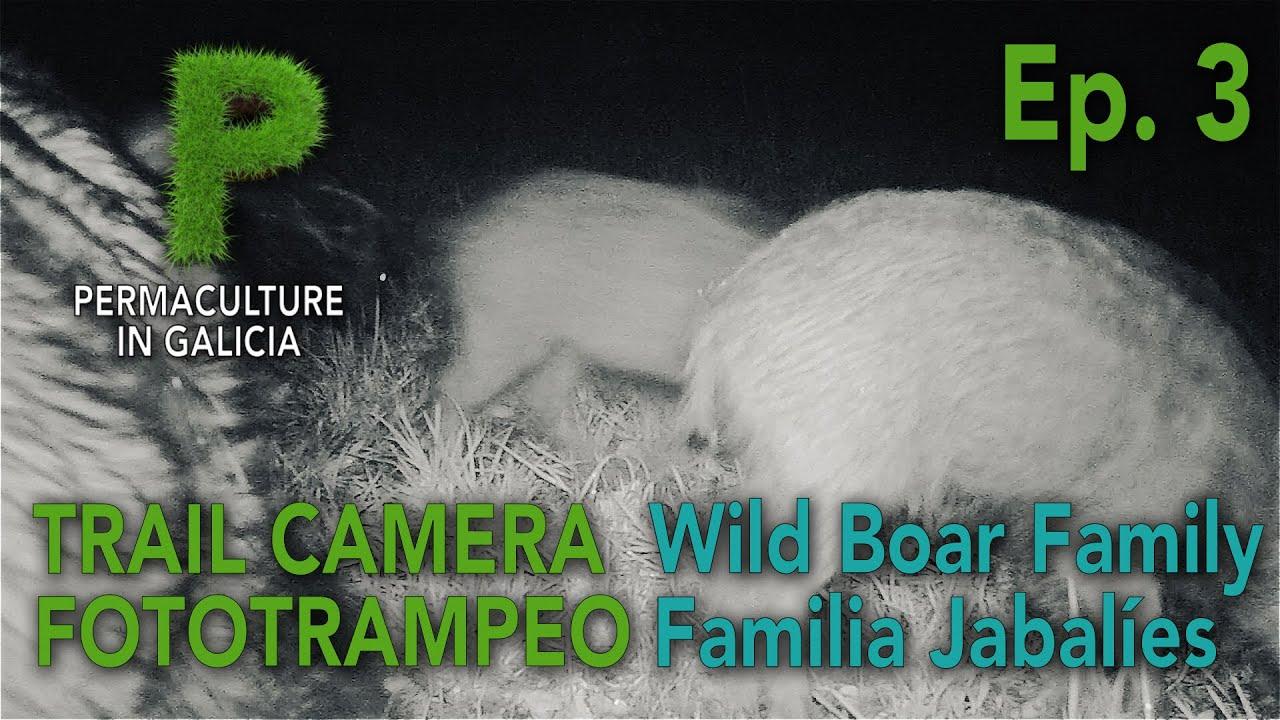 Trail Camera Ep. 03 Familia de Jabalíes en verano | Permacultura en Galicia